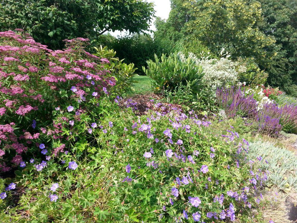 Daniela Stumpf aus Niederstetten kann sich in ihrem Garten an prächtigen Farben freuen.