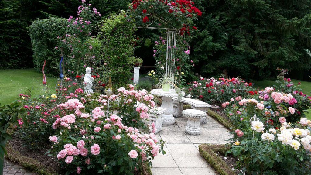 Ein Foto ihres Rosengartens schickten uns Karl und Alberta Otratowitz zu.